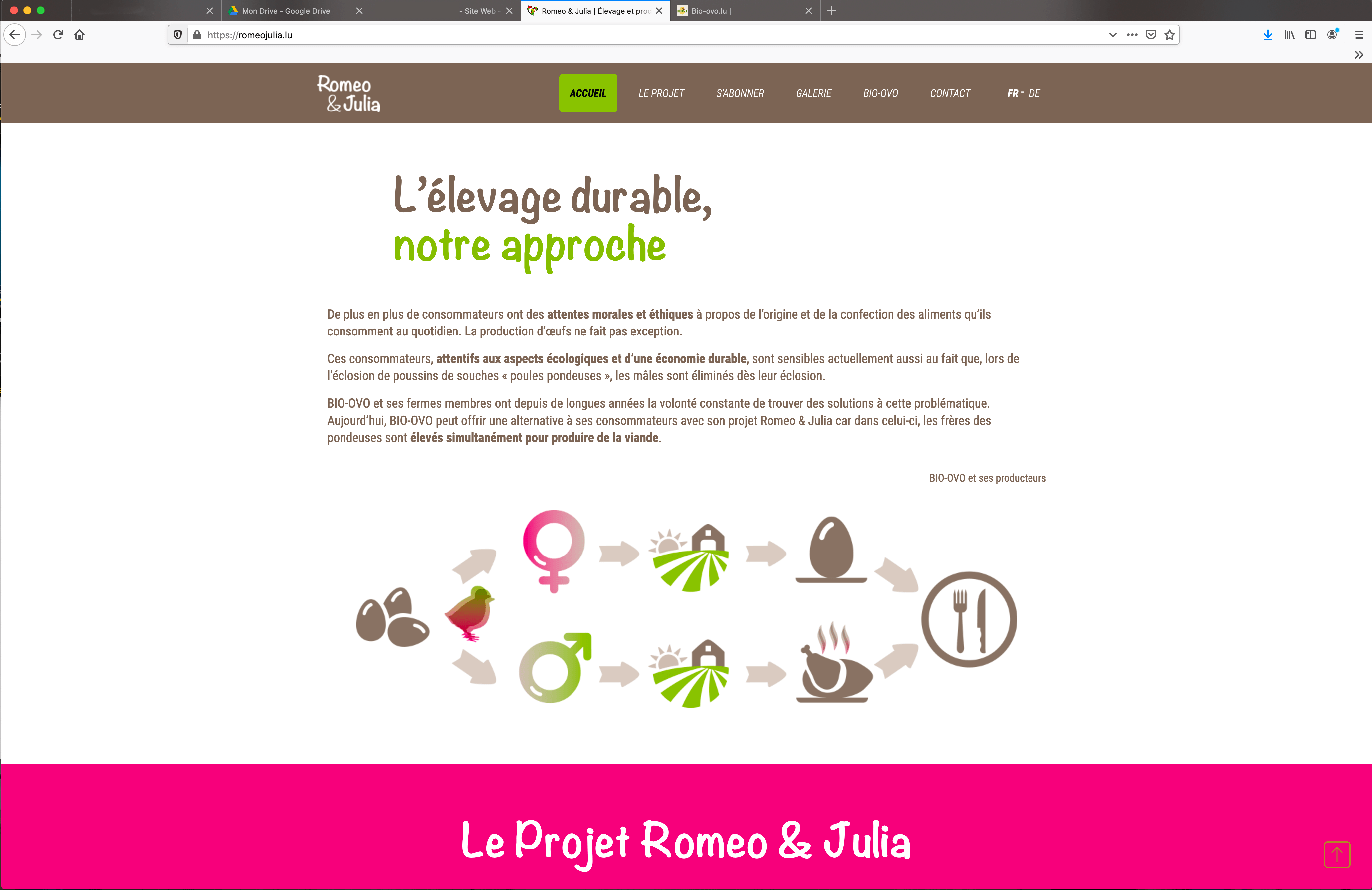 Reperes_RomeoJulia_illustration cycle de l'oeuf